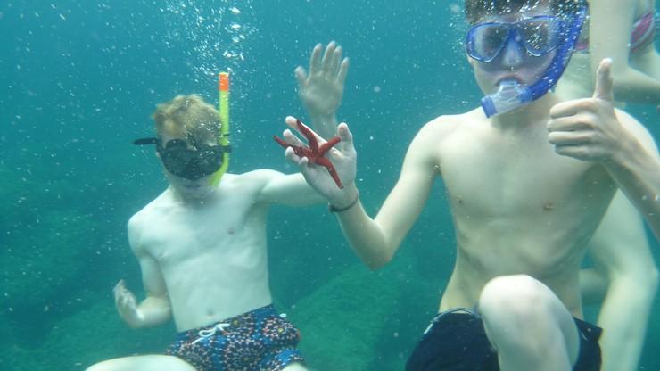 Taucher Meeresbiologie Klassenfahrt